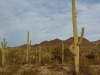 Saguaro National Park photo