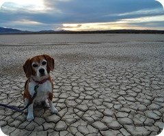 Angie at Clark Dry Lake