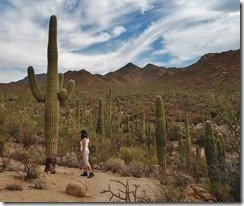 This Saguaro makes Anne look tiny