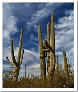 Saguaro NP